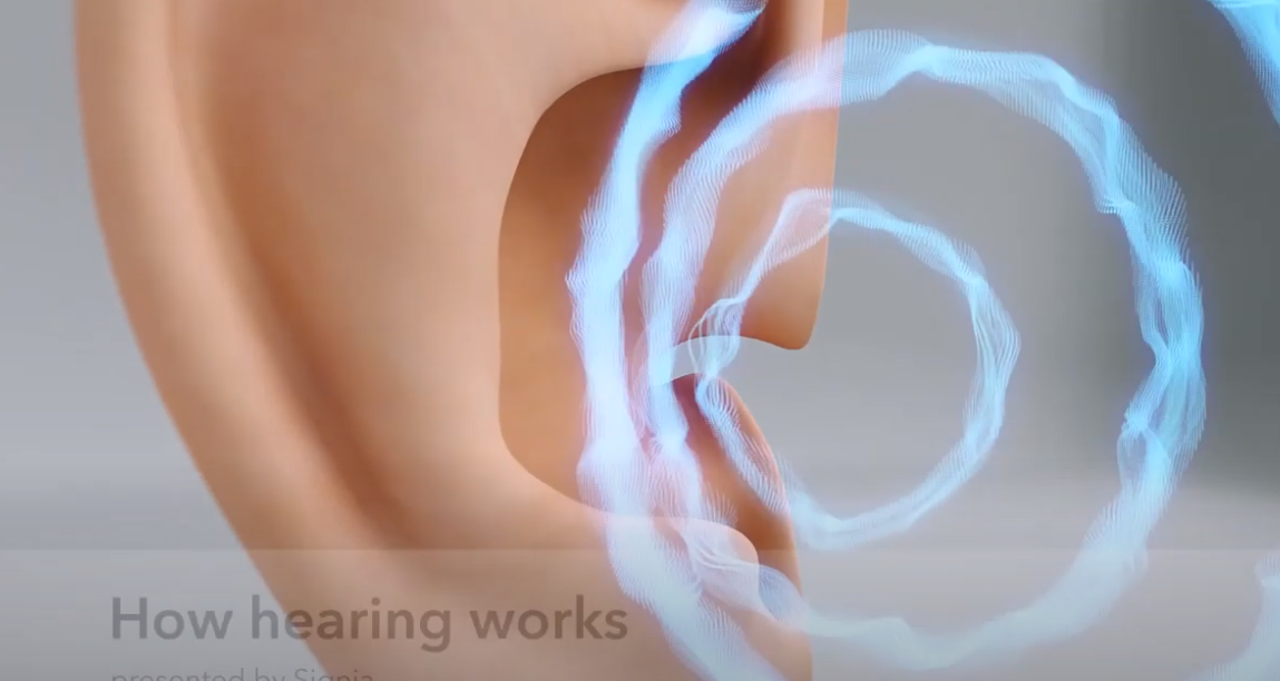 How hearing works   Signia Hearing Aids